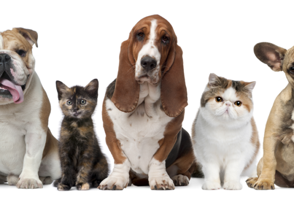 """Can Your Pet Improve Your Wellbeing? A Glimpse into the """"Pet Effect"""""""
