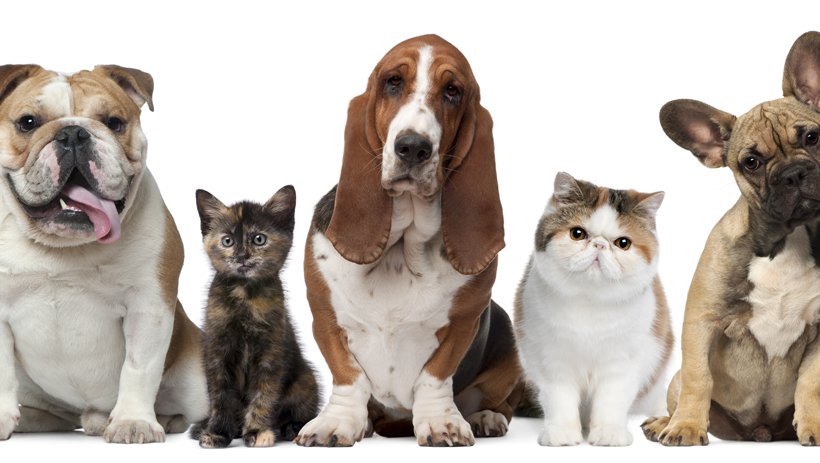 "Can Your Pet Improve Your Wellbeing? A Glimpse into the ""Pet Effect"""